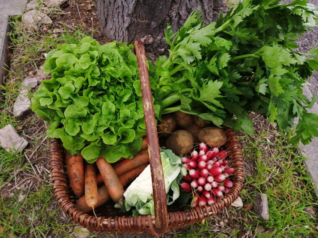 Petit panier de légumes janvier 2021